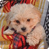 Adopt A Pet :: Cuervo *adoption pending - Anderson, SC