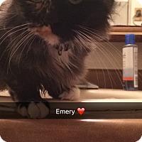Adopt A Pet :: Emery - Albuquerque, NM