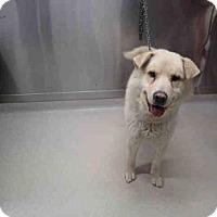 Adopt A Pet :: DUKE - Fairbanks, AK