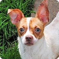 Adopt A Pet :: Sparky - Crowley, LA