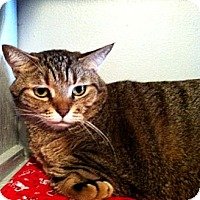 Adopt A Pet :: Butterscotch - Deerfield Beach, FL