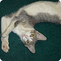 Adopt A Pet :: Sterling - Grayslake, IL
