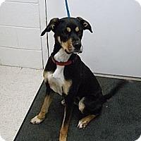 Adopt A Pet :: Biscuit - Lancaster, VA