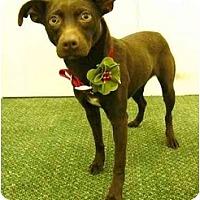 Adopt A Pet :: Princess - Mocksville, NC