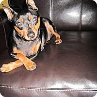 Adopt A Pet :: Onyx - Malaga, NJ