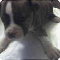 Adopt A Pet :: BRINDA - Fowler, CA