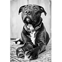 Adopt A Pet :: Mona - Lancaster, PA