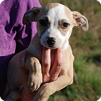 Adopt A Pet :: Flynn - Milford, CT