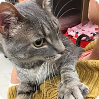 Adopt A Pet :: Wyatt - Muncie, IN