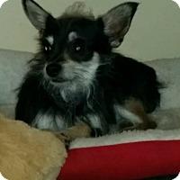 Adopt A Pet :: HERCULES - Boca Raton, FL
