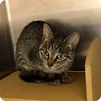 Adopt A Pet :: Lumiya - Colmar, PA