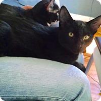 Adopt A Pet :: Onyx - Colmar, PA