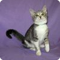 Adopt A Pet :: Candace - Powell, OH