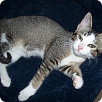 Adopt A Pet :: Jasperr - San Jose, CA