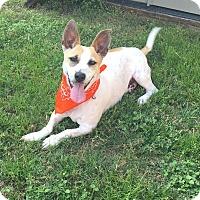 Adopt A Pet :: Marley in San Antonio - Austin, TX