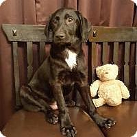 Adopt A Pet :: Paulie - Newark, DE
