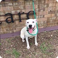 Adopt A Pet :: Kaitlin Snow - Austin, TX