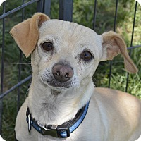 Adopt A Pet :: Watson - Meridian, ID