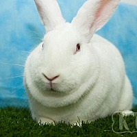 New Zealand for adoption in Pflugerville, Texas - Slider