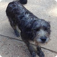 Adopt A Pet :: Edie - Memphis, TN