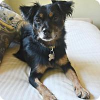 Adopt A Pet :: Cody - San Jose, CA