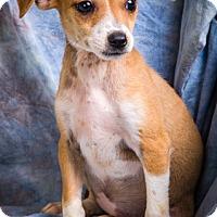 Adopt A Pet :: JADE - Anna, IL