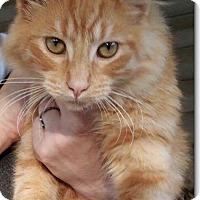 Adopt A Pet :: JD - Huntington, WV