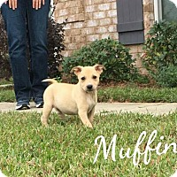 Adopt A Pet :: Muffin - Mobile, AL