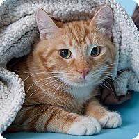 Adopt A Pet :: Hendricks - Wilmington, DE