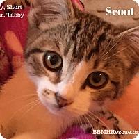 Adopt A Pet :: Scout - Temecula, CA