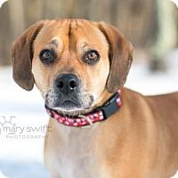 Adopt A Pet :: Rex - Reisterstown, MD
