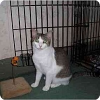 Adopt A Pet :: Shelby - North Plainfield, NJ