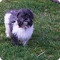 Adopt A Pet :: Jasmine - Harrisburgh, PA