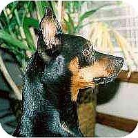 Adopt A Pet :: Diesel - Florissant, MO