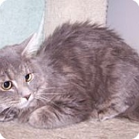 Adopt A Pet :: K-Angie2-Hope - Colorado Springs, CO