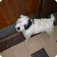 Adopt A Pet :: Rags - Wisconsin Dells, WI