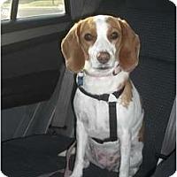 Adopt A Pet :: Turbine - Phoenix, AZ