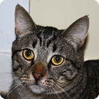 Adopt A Pet :: Devin - North Branford, CT