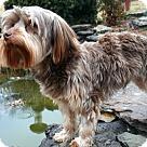 Adopt A Pet :: PUPPY ALPHIE