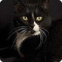 Adopt A Pet :: Juni - Gilbert, AZ