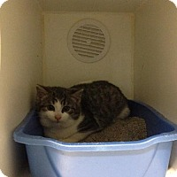 Adopt A Pet :: Boo - Caistor Centre, ON