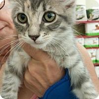 Adopt A Pet :: SilverSurfer - North Highlands, CA