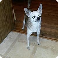 Adopt A Pet :: Lola - Dayton, OH