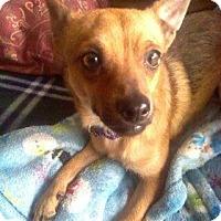 Adopt A Pet :: Ivan - Adoption Pending - West Allis, WI
