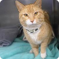 Adopt A Pet :: C-68023 Han - Westampton, NJ