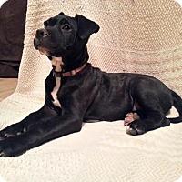 Adopt A Pet :: Junior - Cordes Lakes, AZ