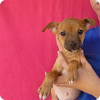 Adopt A Pet :: Onie - Oviedo, FL