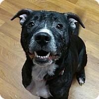 Adopt A Pet :: Dougie- Sponsored! - Lisbon, OH