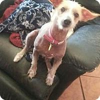 Adopt A Pet :: Gringa - Tucson, AZ