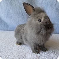 Adopt A Pet :: Paisley - Fountain Valley, CA